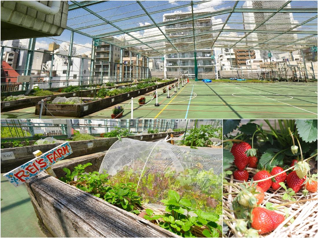 曾經作為孩子們運動場的屋頂,如今變成了園藝空間!
