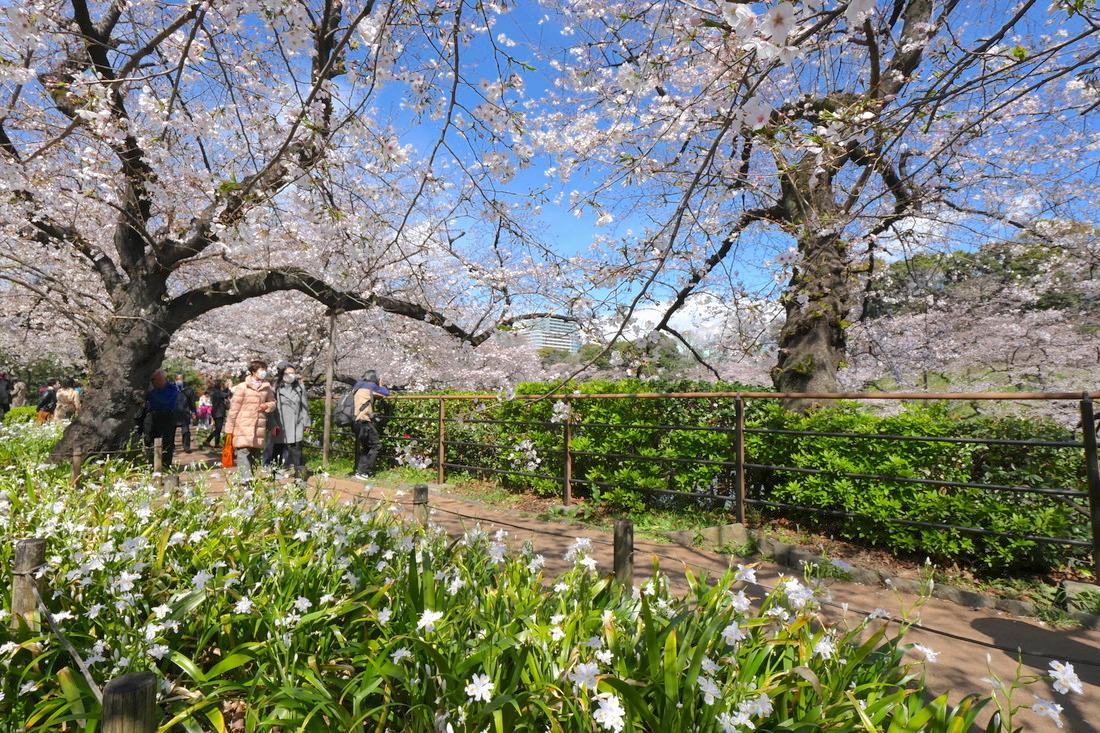 如果跑到北之丸公園的話,一定要去千鳥之淵!特別是賞櫻和賞紅葉的季節,特別的漂亮。