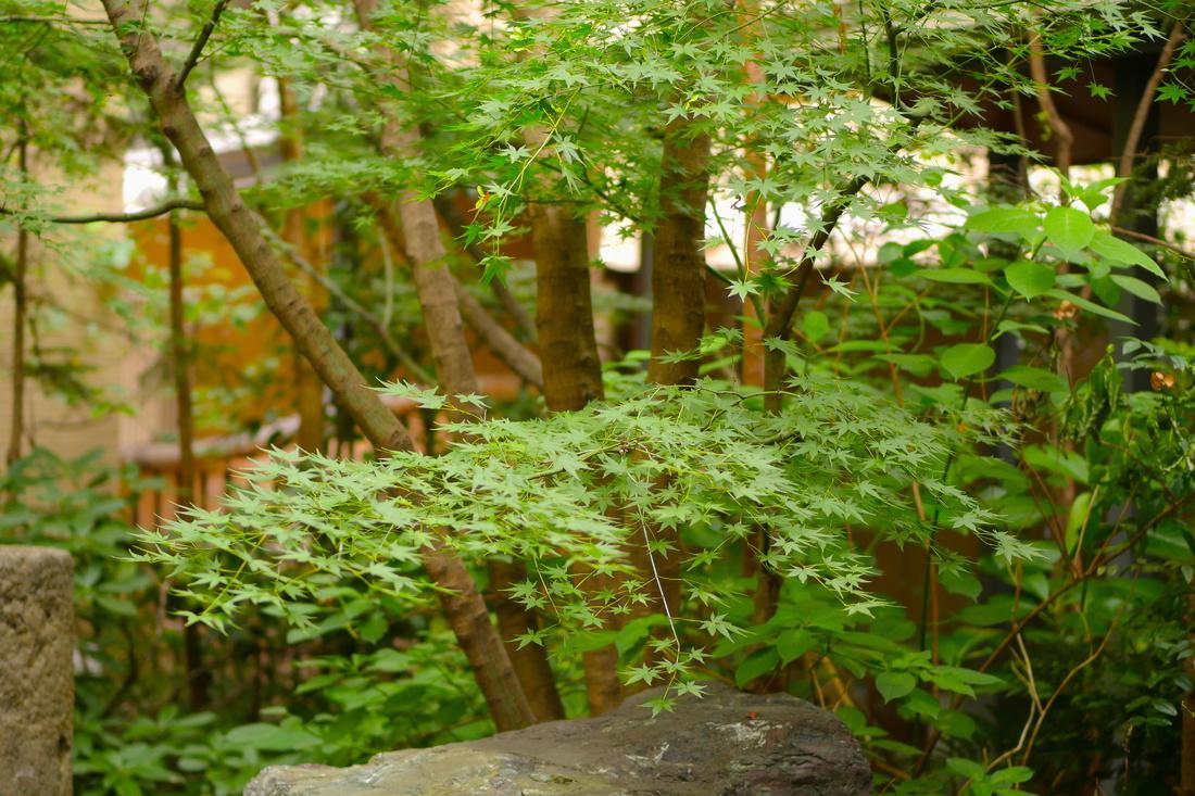 8월의 안뜰은 초록이 가득!