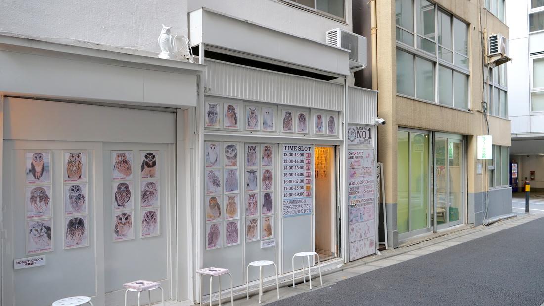 Owl Cafe Akiba Fukurou Tokyo